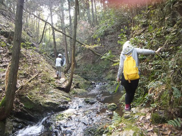 八曽自然休養林