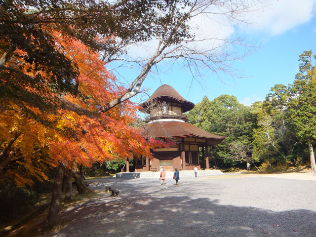 上野城の紅葉